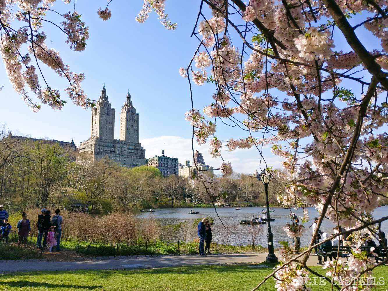 Qué hacer en abril en Nueva York - Central Park en primavera