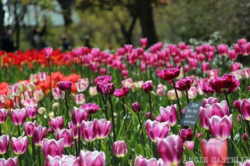 Brooklyn Botanic Garden Nueva York tulipanes