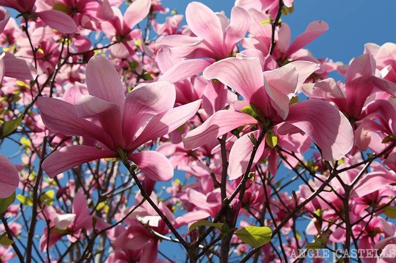 Brooklyn Botanic Garden Nueva York visitar