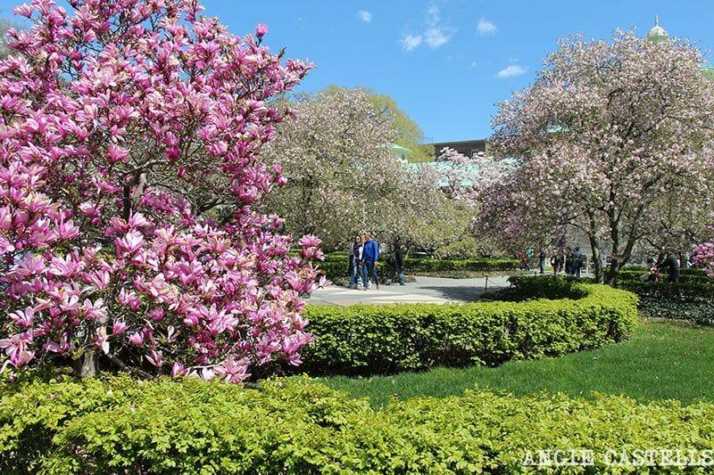 Jardin Botanico de Brooklyn Nueva York