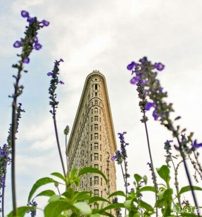 El mes de junio en Nueva York - Edificio Flatiron