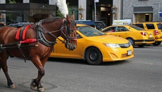 Por qué evitar los carruajes de caballos de Central Park
