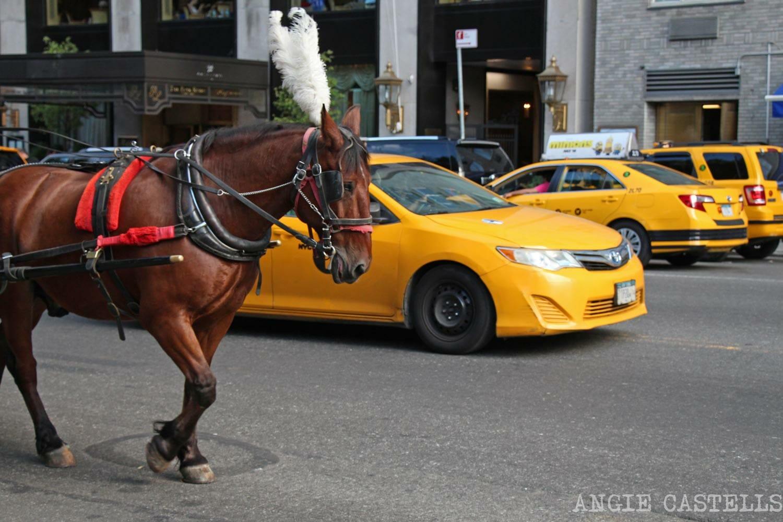 Carruajes-de-caballos-en-Central-Park