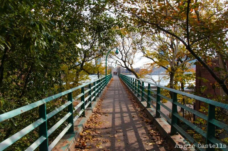 El otoño en Nueva York East River Queensboro Bridge-1