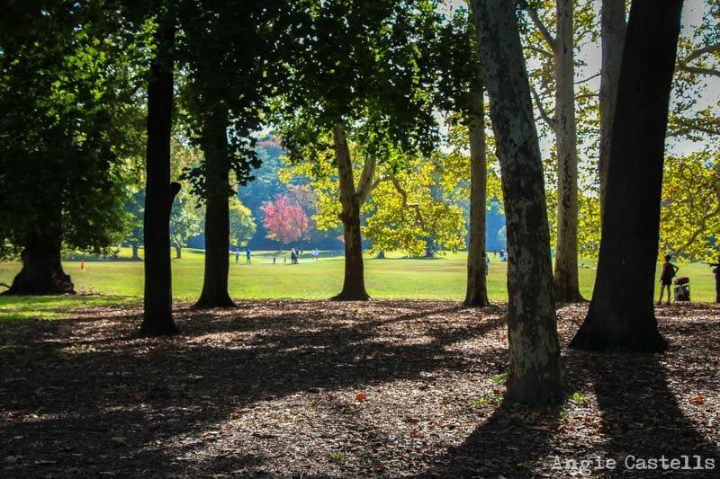 El otoño en Nueva York Prospect Park y Park Slope-2