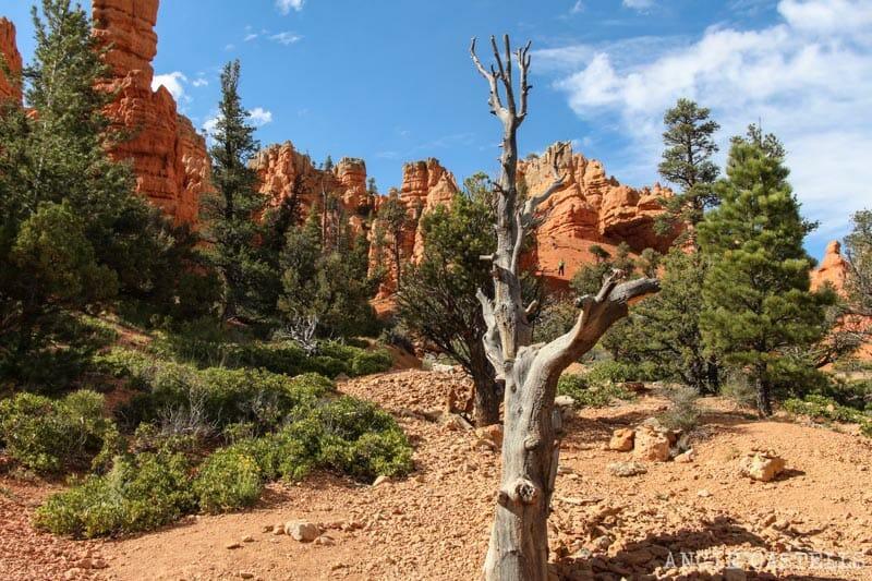 Ruta Costa Oeste USA Itinerario Red Canyon