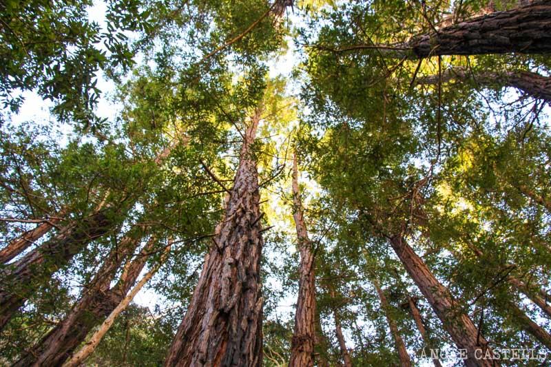 Ruta por el Big Sur y la Pacific Coast Highway, en California - Julia Pfeiffer Burns State Park