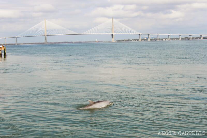 Guía de Charleston: Delfines en el Waterfront Park