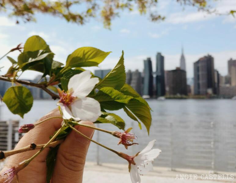 La mejor época para viajar a Nueva York - Primavera y flores en Long Island City