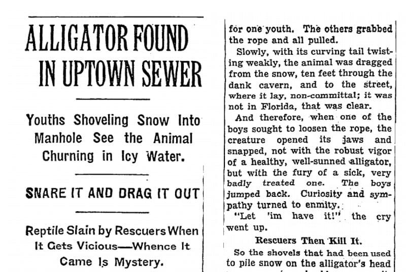 El origen de la leyenda urbana de los caimanes de Nueva York