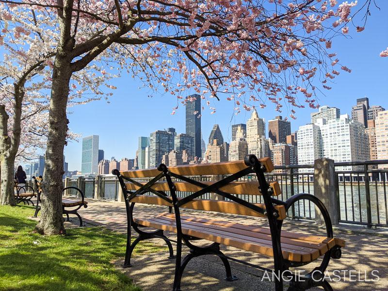Primavera en Nueva York - Cerezos en flor en Roosevelt Island