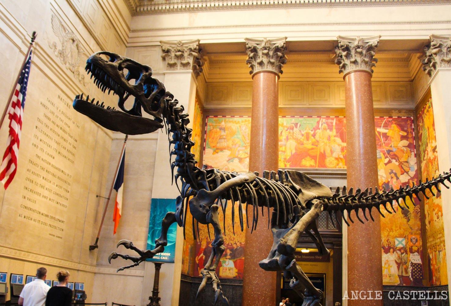 Visitar el Museo de Historia Natural de Nueva York - Precios, entradas y que ver