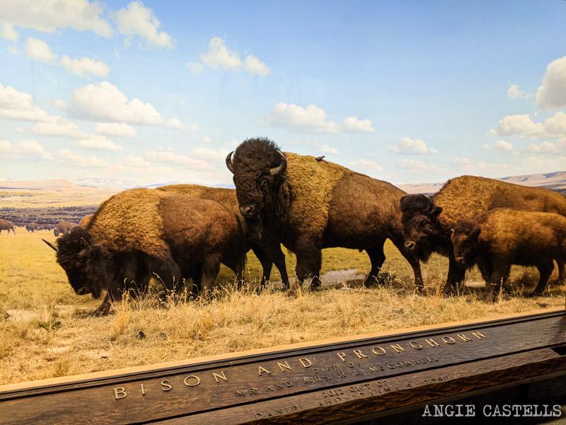 Los dioramas del Museo de Historia Natural de Nueva York - Bisontes