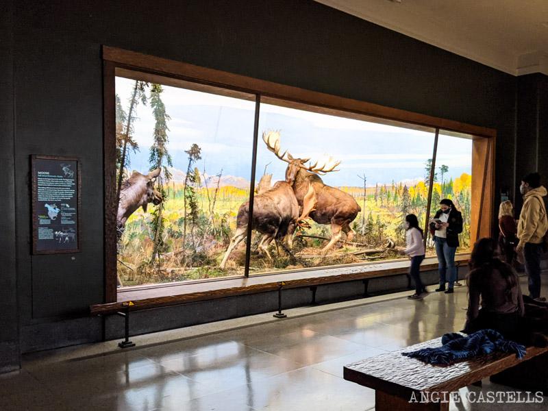 Los dioramas del Museo de Historia Natural de Nueva York