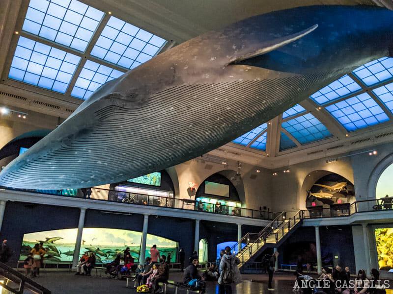 Hall of Ocean Life y la ballena azul del American Museum of Natural History