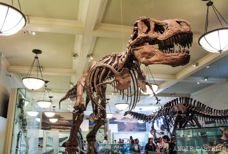 El TRex y los dinosaurios del Museo de HIstoria Natural de Nueva York