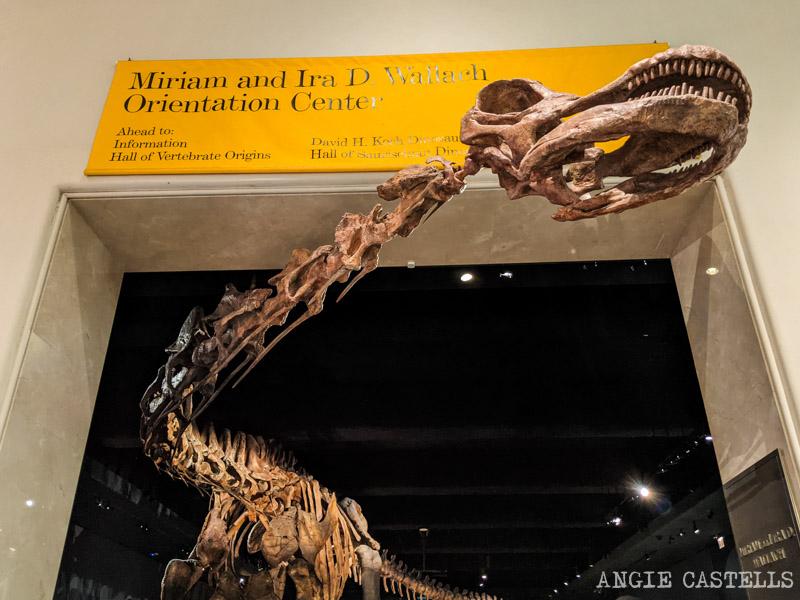 Los dinosaurios del Museo de HIstoria Natural de Nueva York
