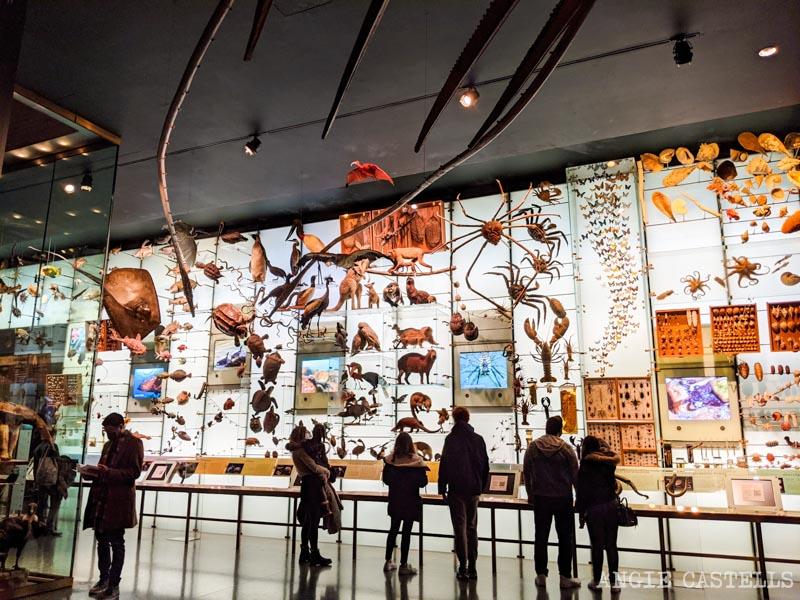 Que ver en el Museo de Historia Natural de Nueva York - Hall of Ocean Life