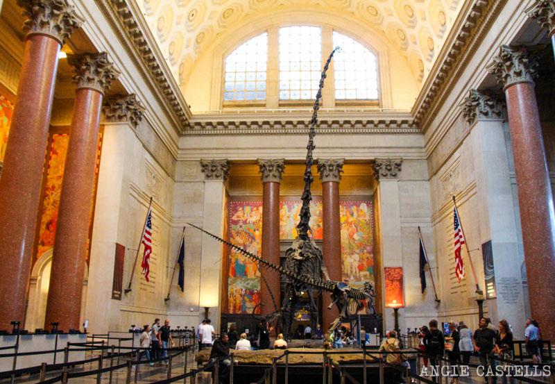Que ver en el Museo de Historia Natural de Nueva York - El vestibulo