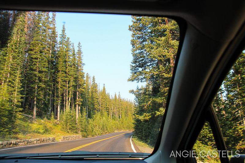 Rutas en coche por Estados Unidos - Bosques de Colorado