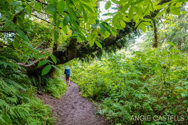 Excursiones por Oregon - Bosques